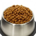 Elevated Dog Bowls And How They Make Eating More Enjoyable