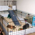 Which Is The Right Cage Choice For The Guinea Pig?