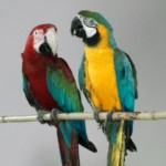 Loud Parrots Have A Reason To Be Like That