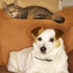 Cats And Dogs And How You Can Make Them Get Along