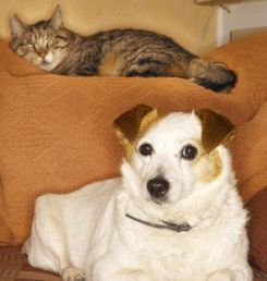 cats and dogs and how you can make them get along the pets central. Black Bedroom Furniture Sets. Home Design Ideas