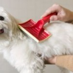 5 Most Effective Natural Dog Flea Treatments