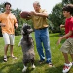 Dog Games &#8211; Bonding Ideas For You And Your Pet