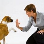 Dog House Training For Your Pet