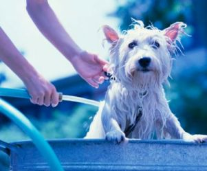 bathing dog