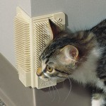 Get Help For Cat Grooming From Cool Grooming Toys