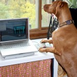 dog at work 25