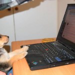 dog at work 6