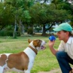 Raise Smart Dogs In Dog Training Schools
