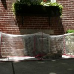 outdoor for cats 3