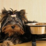 Wet Food Vs. Dry Food – A Challenge For The Pet Owners