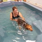 Water Therapy Helps Your Pet Recover From Injury