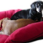 Orthopedic Dog Bed Features