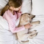 To Share Or Not To Share The Bed With Your Pet