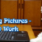 30 Cute Dog Pictures – Dogs @ Work