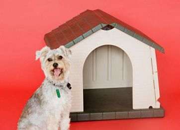 dog house