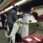flying with pets 1
