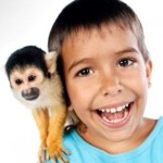 The Challenge In Keeping Monkeys As Pets