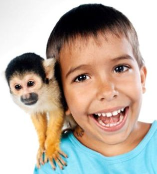 monkeys as pets