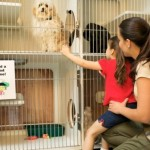 Why Should You Get A Pet From Pet Adoption Centers?
