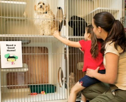 pet adoption centers