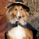 How Do Dogs Handle Halloween?