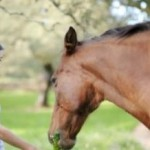 The Must-Know Basics About Feeding Your Horse