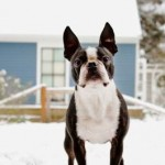 Protect Your Pet Against The Winter Chill
