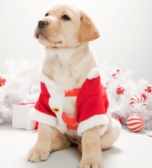 christmas safe for pets