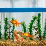 Fresh Water Fish Tank Care &#8211; from Cleaning to Refilling