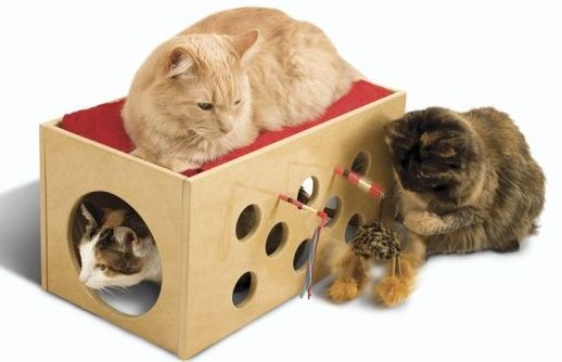 pioneer pet bunk bed