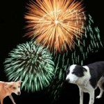 Pets and the Fear of Fireworks