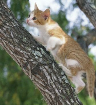cat on trees