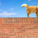 Cats and the Mystery of the Tall Places They Like