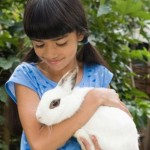 How Ready Are You for a Pet Rabbit?