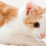 Healing Cat's Stress – The Right Way to Go About