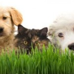 The Pros and Cons of Vegan Pet Chow