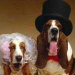 Pet Wedding &#8211; Walk Your Dog Down the Aisle