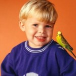 6 Adorable Pet Bird Species for Kids