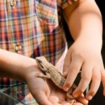 Owners' Guide to the First Pet Reptile