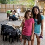 Petting Zoos – Things You Ought to Know
