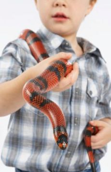 Snake as Pet