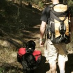 Take the Dog Hiking but Be a Responsible Owner
