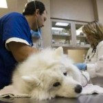 Are Google Tips Replacing the Vet Care?
