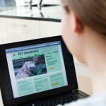 The Pet Insurance Issue and What Hides Behind It