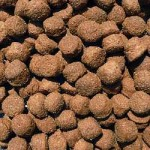 The Natural Pet Food and What It Is Actually About