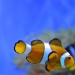 What You Should Know About Coral Reef Fish