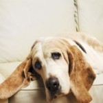 The Dog Cancer Symptoms and How Should You React to Them