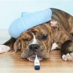 Dog Illness Symptoms and What Should You Look For