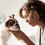 Treating the Ear Infections in Dogs the Right Way